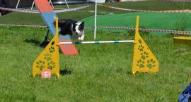 III Sportowy Piknik z Psem – Pies na Medal